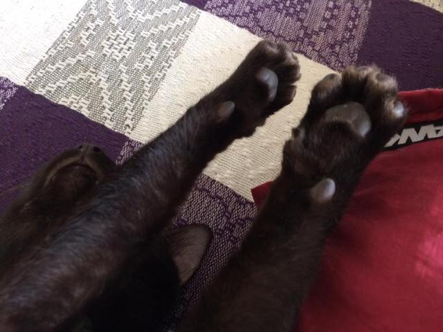 cat-notmy1