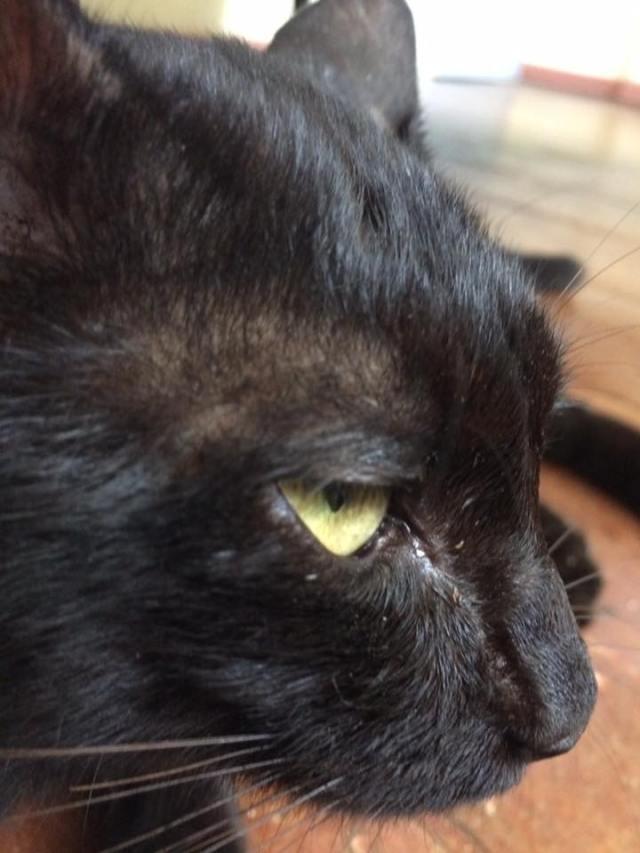 cat-notmy4