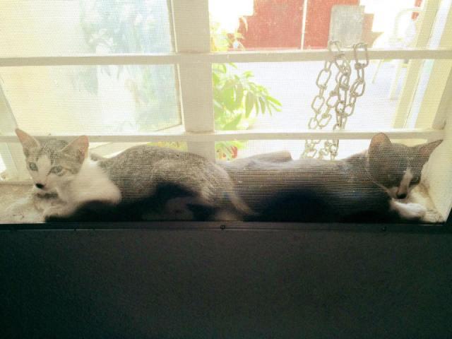 cat-pistot3